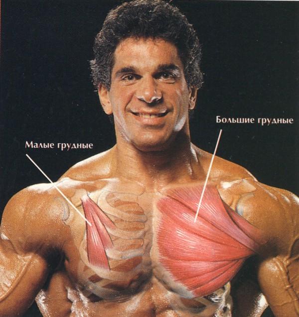 схема как накачать мыщцы груди