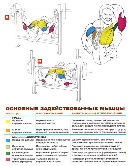 упражнения для груди жим лежа