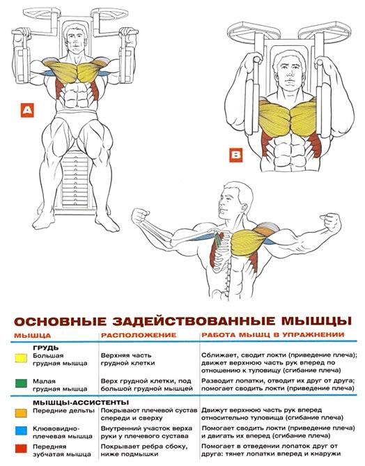 сведение в тренажере упражнения для груди