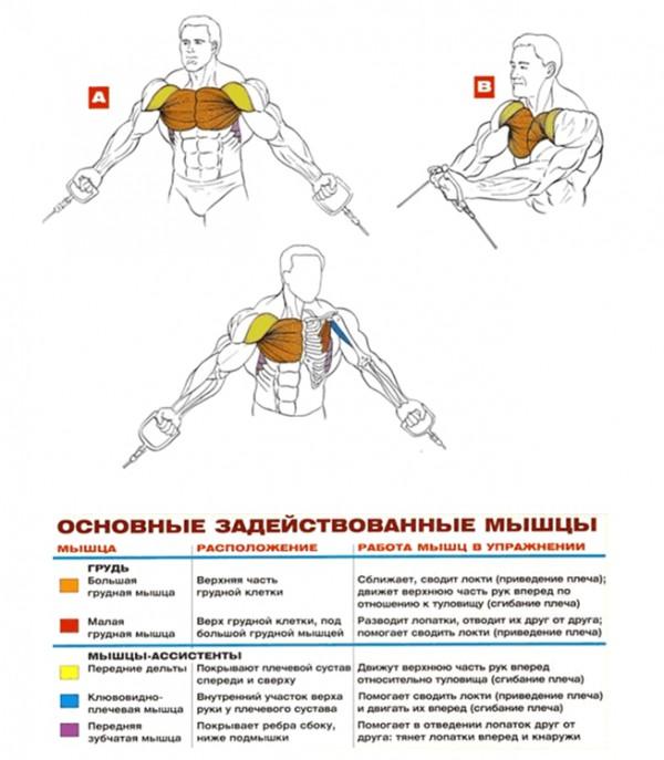 Кроссоверы на нижнем блоке упражнения для груди