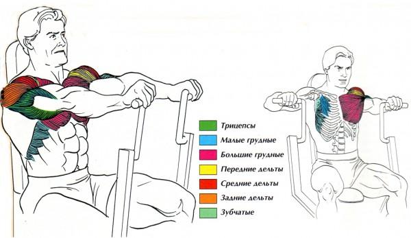 мышцы жим тренажера сидя