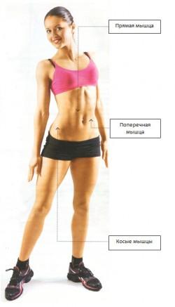 плоский живот мышцы пресса
