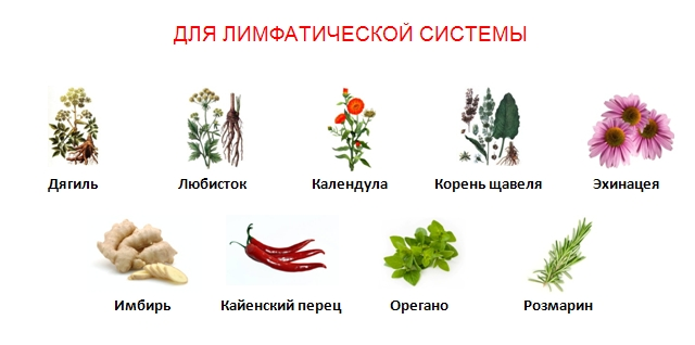овощи очищения печени